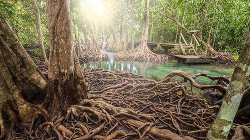 沈阳甲米兰塔岛+红树林皮划艇菜馆一日游【趣泰国滑翔老海钓图片