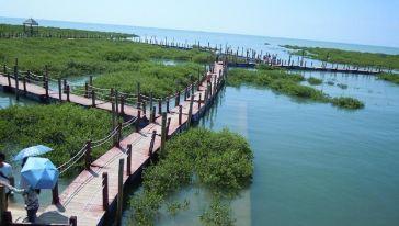 整个景区面积约20平方公里,由红树林观光带,金滩和主园区三部份构成.图片