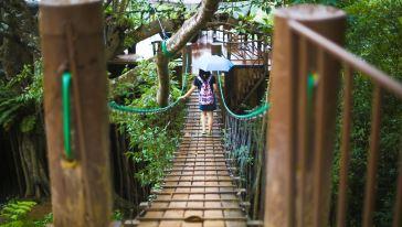 爱丽丝梦游仙境~清迈潭洞度假村 大树咖啡屋 温泉梦幻图片