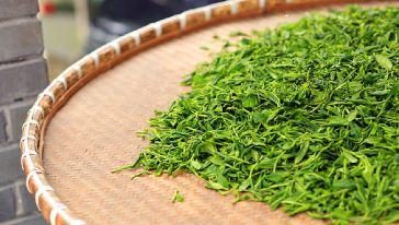 临安男士品茶 杭州茶文化