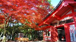 奈良·红枫