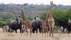 骑大象Safari