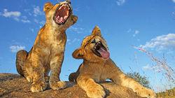 克鲁格国家公园保护区野生动物