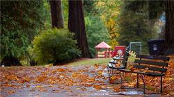 斯坦利公园—秋景一角