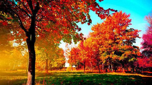秋景枫叶图片大全手绘
