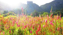 南非国家植物园