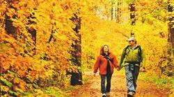 班夫国家公园枫中漫步