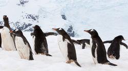 silver expolrer Paradise Bay企鹅