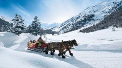 最著名的冬季运动-马拉雪橇