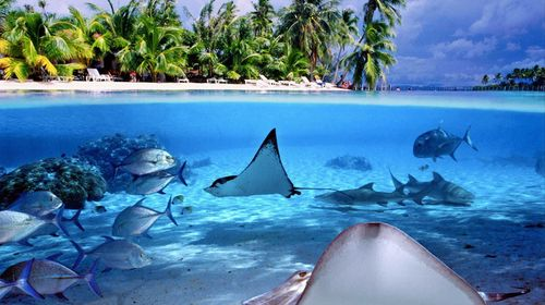 大溪地·茉莉雅+波拉波拉四季·拥抱海豚+与魔鬼鱼