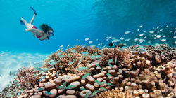 马尔代夫潜水