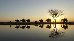 Camp Jabulani骑大象