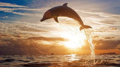 夏威夷日落美景