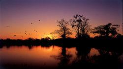 亚马逊日落