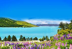 新西兰庄园