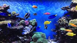 蒙特雷水族馆