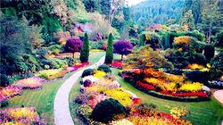 上帝后花园-布查特花园