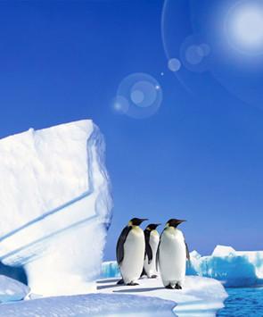 春节直飞南极