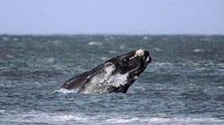 瓦南布尔观鲸