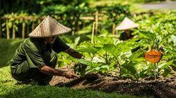 山妍四季·菜园