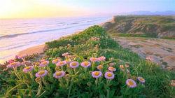 人生必去---大苏尔的鲜花