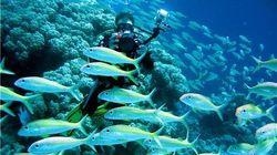 蓝梦岛潜水