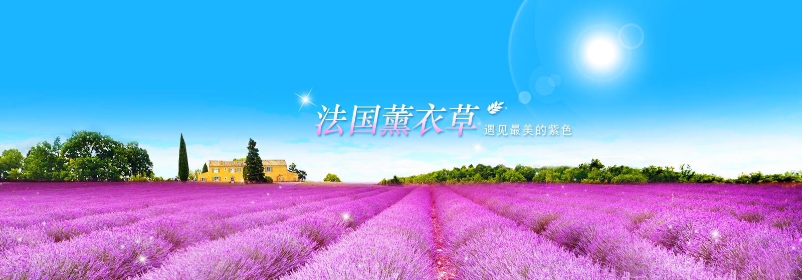 遇见最美的紫色_法国熏衣草