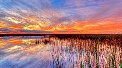 世界遗产—大沼泽国家公园与濒危野生动物亲密接触