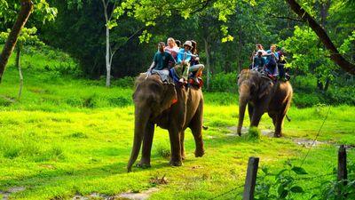国家公园骑大象