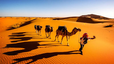撒哈拉骆驼骑行