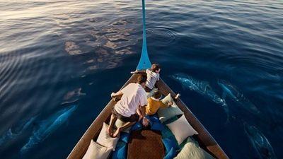 Kuda-Dolphin Watching