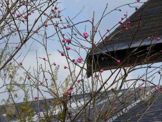 【携程讲堂】西彭葡萄园门票,重庆西彭葡萄园名师高中攻略图片
