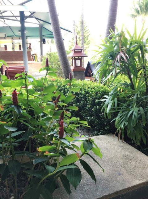 普吉岛兰花度假酒店(orchid resort and spa phuket)点评