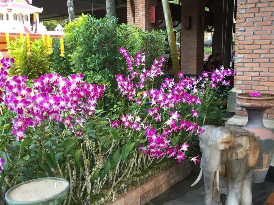 普吉岛兰花度假酒店(orchid resort and spa phuket)
