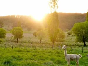 Glen Waverly Farmstay