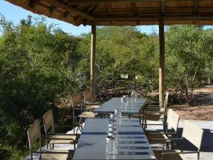 The Wild Olive Tree Camp