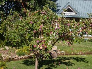 Apple Orchard Cottages