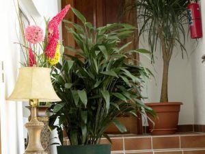 Flores Hotel Boutique