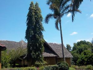 Kilimanjaro Eco Lodge