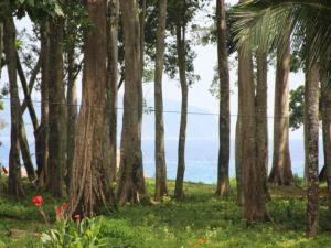 Pearl Park Beach Resort-Neil Island