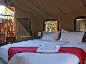 Shindzela Tented Safari Camp and Walking Safaris Accommodation