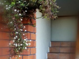 Rosewood Court Motel Christchurch