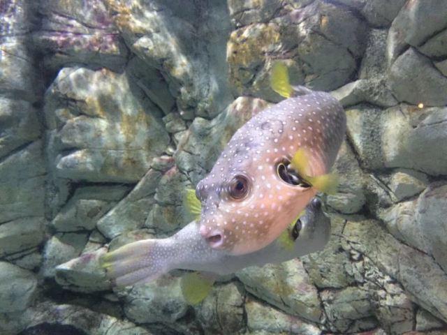 曲江萝卜攻略极地好玩,曲江萝卜极地公园景公园金挑战海洋保卫海洋19图片