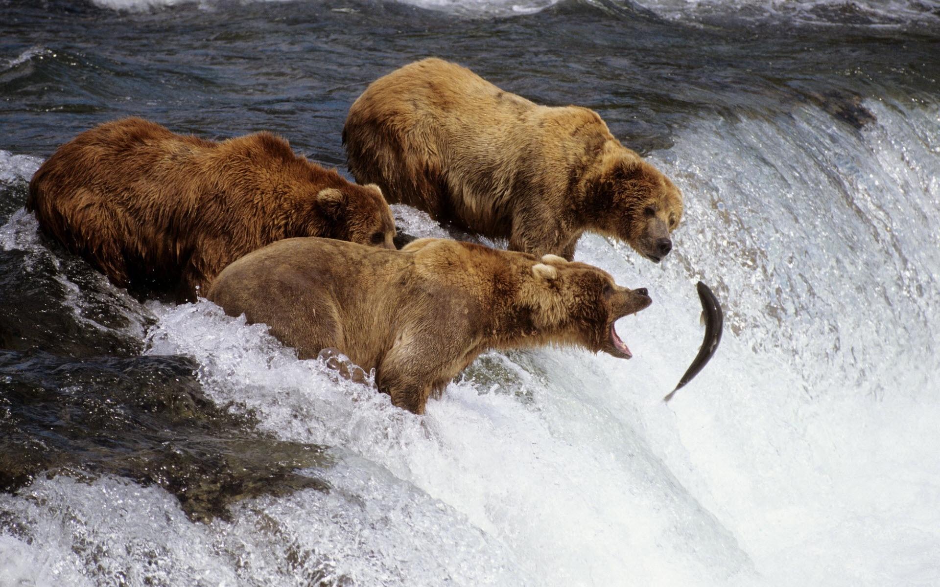 观景火车 野生动物 海洋动物
