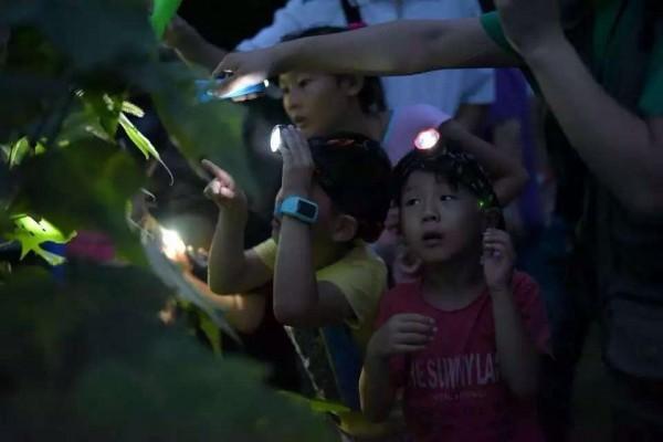淀山湖南岸生态步道夜行动物