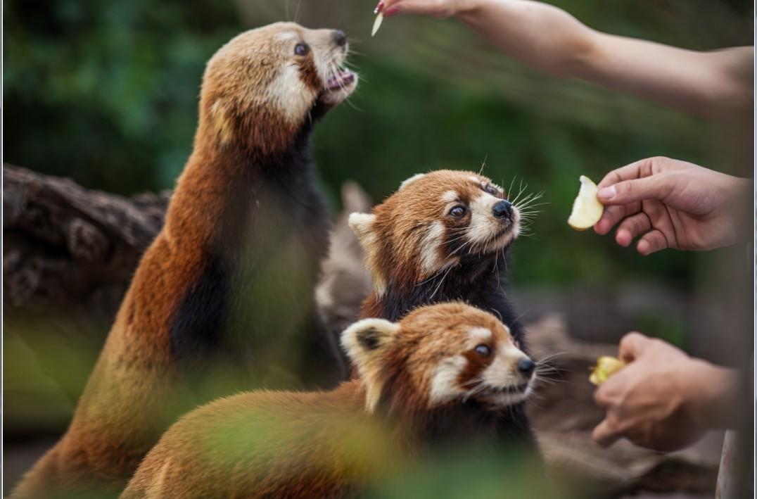 小熊猫庄园 丛林派对&熊出没