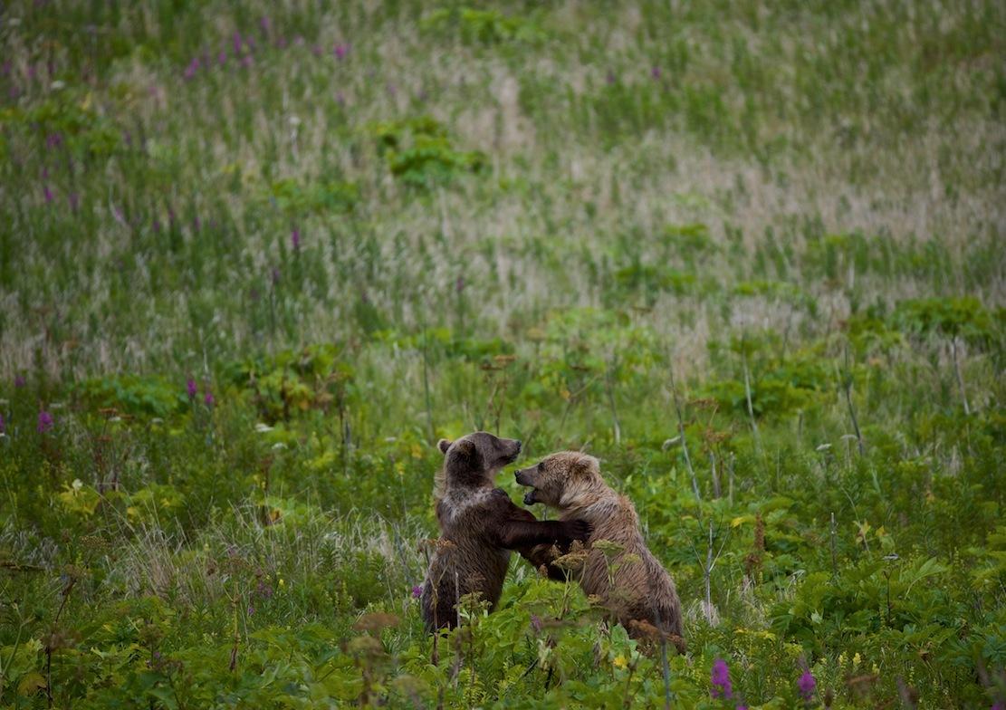 我们将前往阿拉斯加 野生动物保护中心