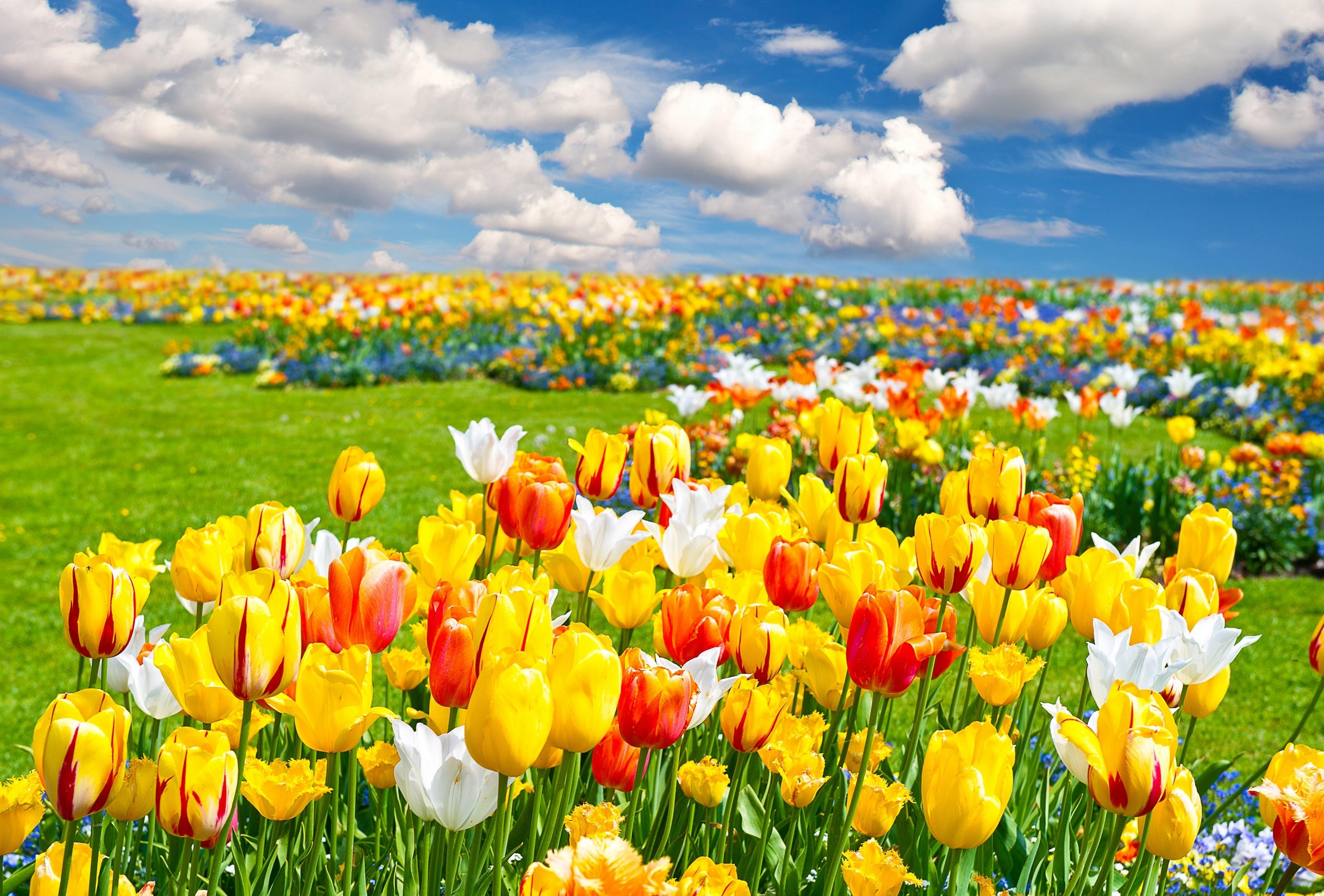 壁纸 成片种植 风景 花 植物 种植基地 桌面 3850_2606