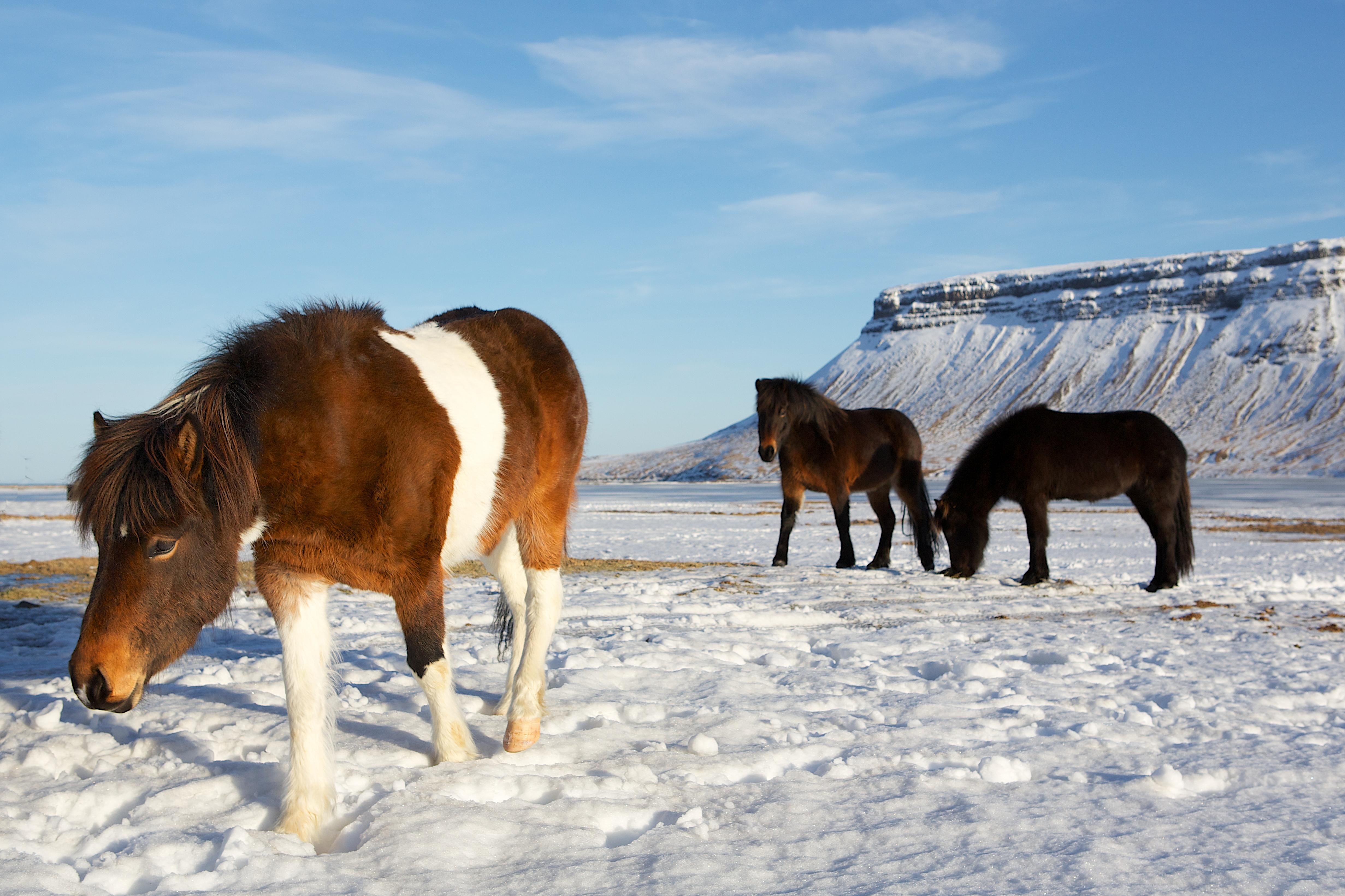 乐园游·北极 芬兰 冰岛18日16晚跟团游·北极熊王国极地探索