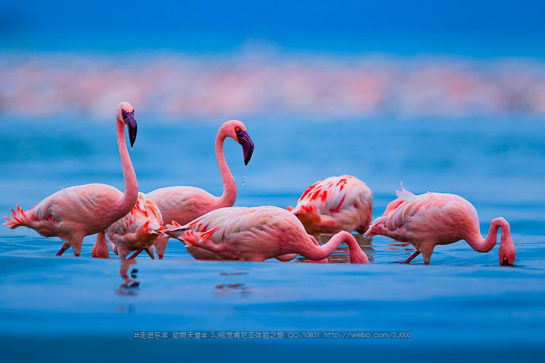 肯尼亚航空kq 港进港出动物迁徙之旅